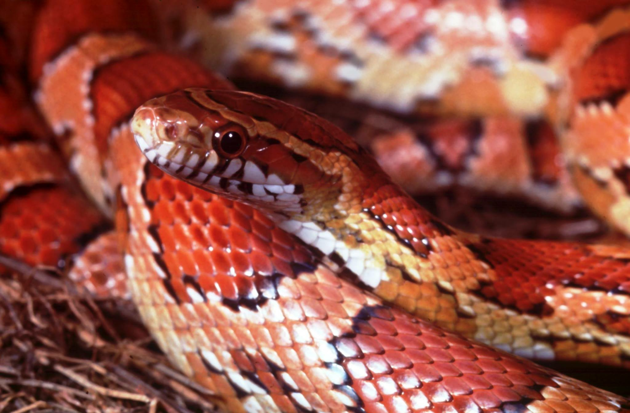 INVASIVE SPECIES | ROLLING HARBOUR ABACO