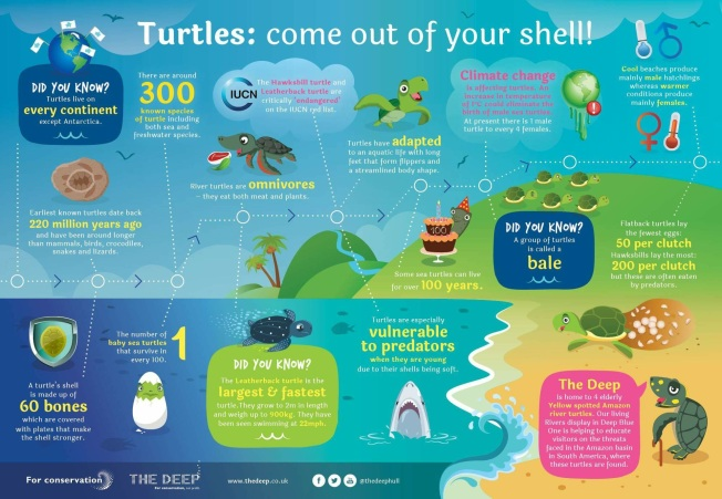 Sea Turtle Conservancy infographic.JPG
