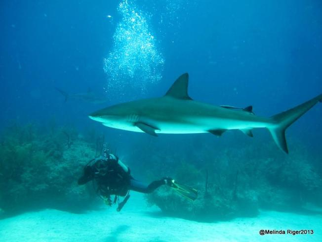 Shark May 2 ©Melinda Riger @ G B Scuba