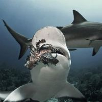 ABACO FACTS (including likelihood of adverse shark encounter or shipwreck)