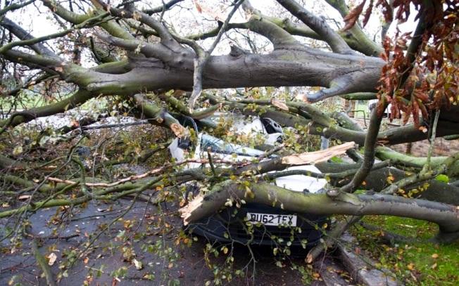 storm-weather-tree_2715589k