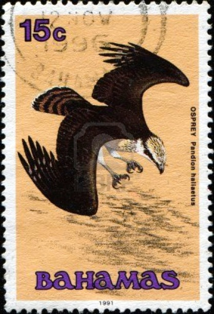 Bahamas Wildlife Stamp Osprey