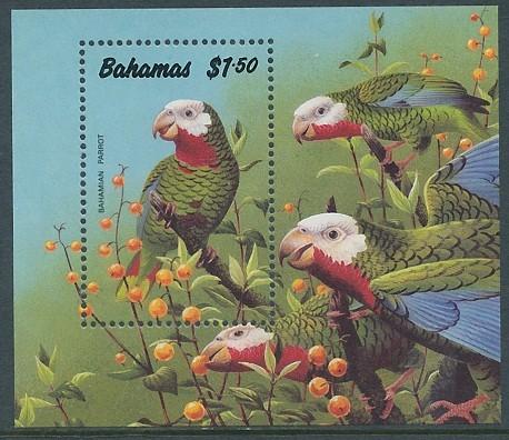 bahamas_90_parrot_ms