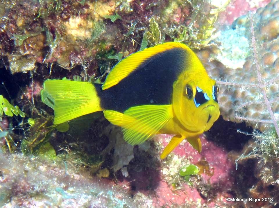[Image: shy-hamlet-c2a9melinda-riger-grand-bahama-scuba.jpg]