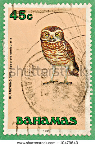 stock-photo-a-bahamas-stamp-featuring-a-burrowing-owl-on-the-face-10479643 copy