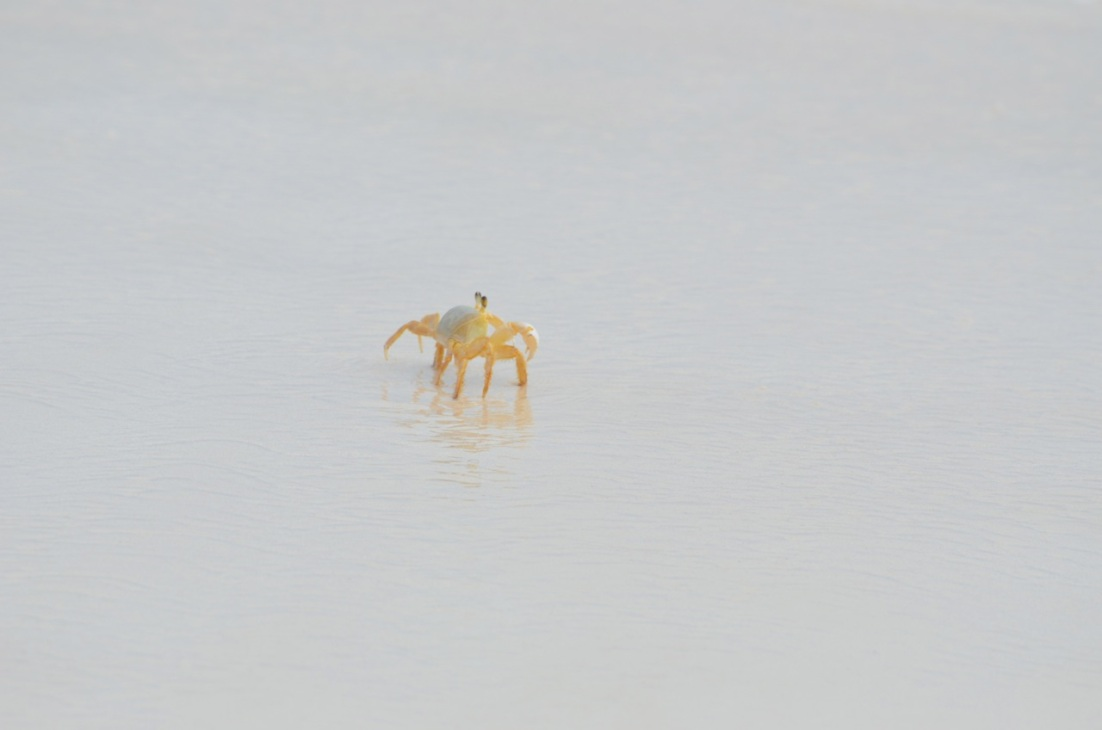 Ghost Crab Delphi Beach 6