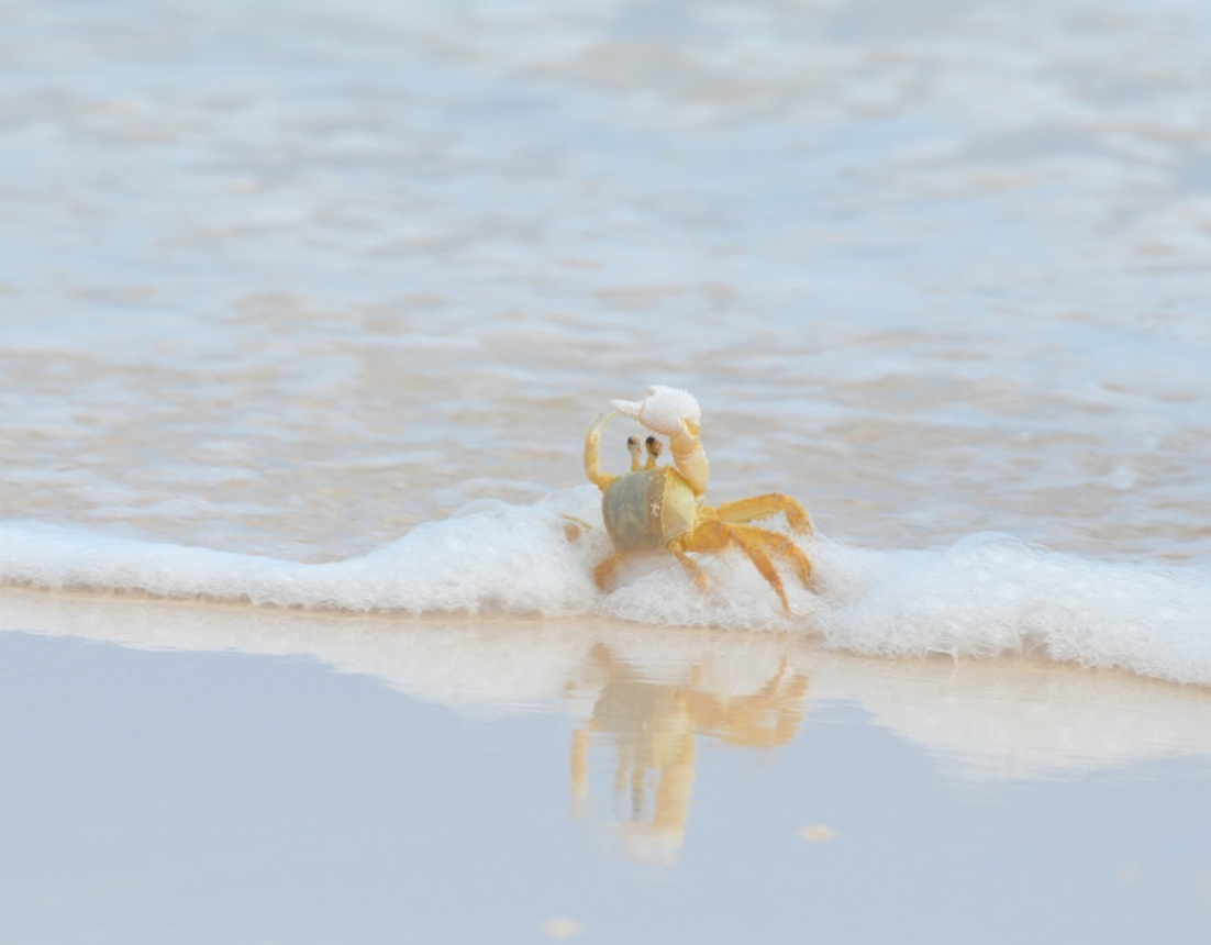 Ghost Crab Delphi Beach 9