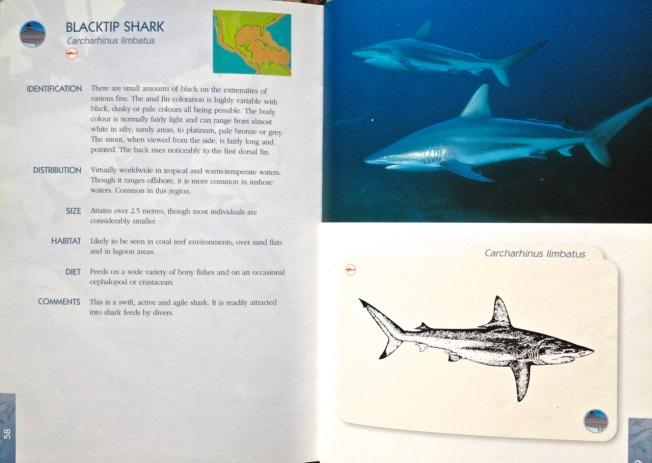 Shark Book 3