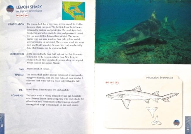 Shark Book 4