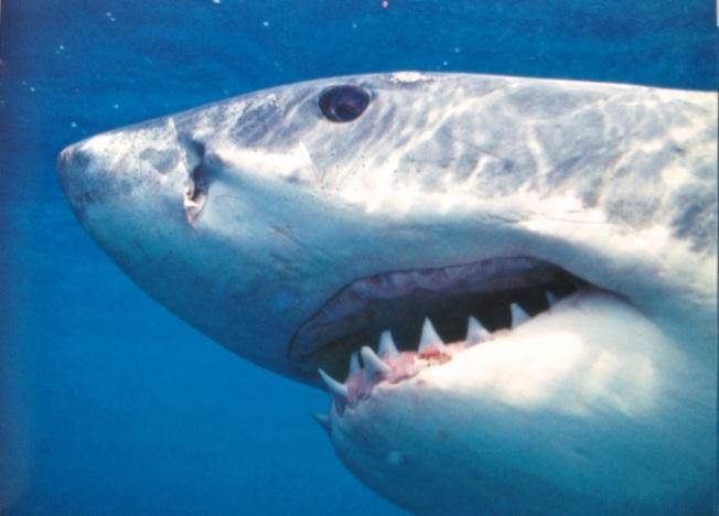 Shark Book 7