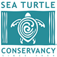 SEA TURTLE POSTERS