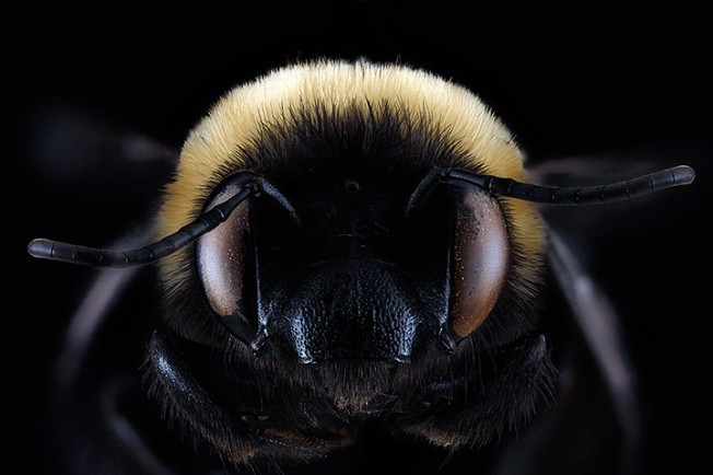 Macro photograph of bee #13