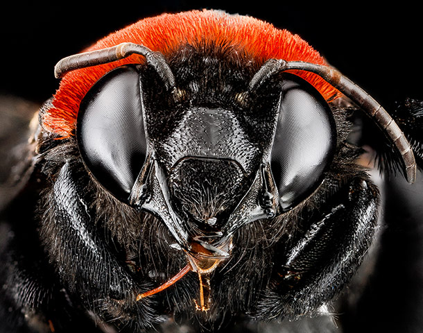 Macro photograph of bee #14