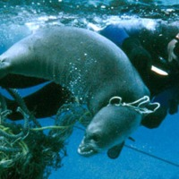 MARINE DEBRIS? NO THANKS! 10 FACTS FROM NOAA
