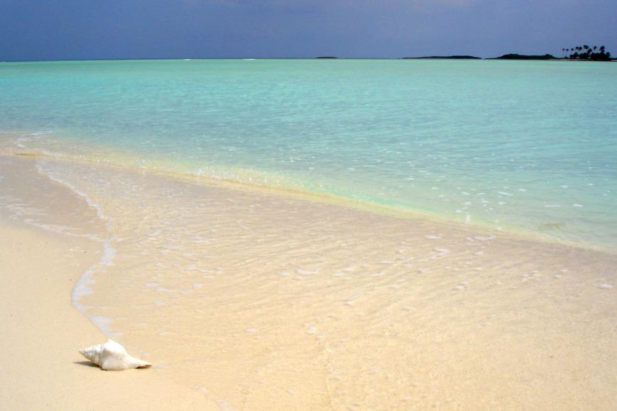 Gillam Bay GTC AD shell-on-beach