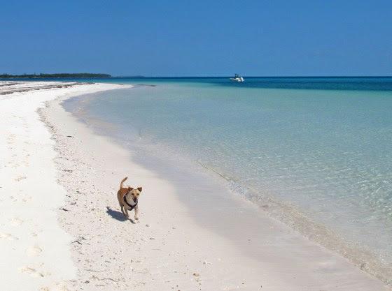 Green Turtle Cay, Abaco - beach (Amanda Diedrick)