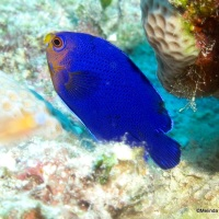 BAHAMAS REEF FISH INDEX