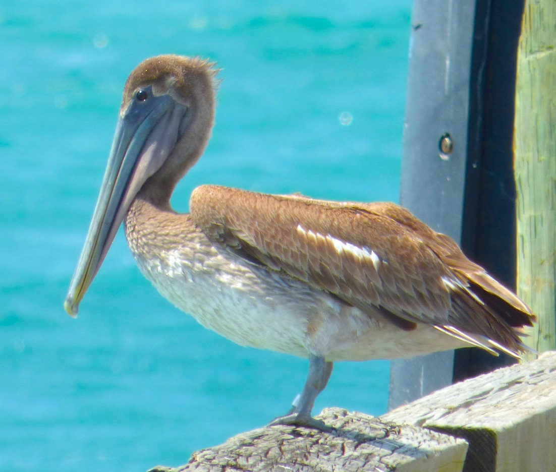 Pelican Sandy Point Abaco 2