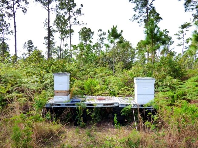 Abaco Neem Farm Hives 1
