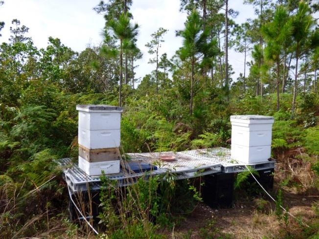 Abaco Neem Farm Hives 2