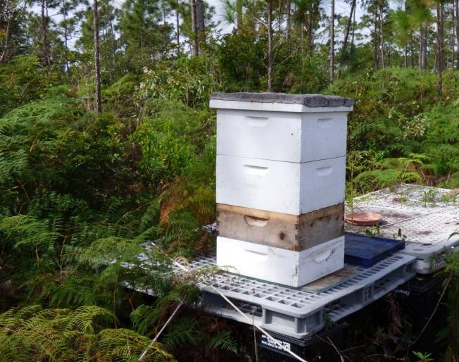 Abaco Neem Farm Hives 3