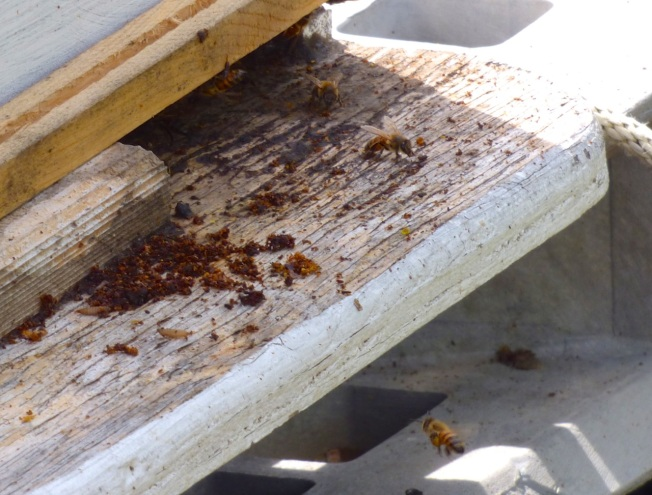 Abaco Neem Farm Hives 4