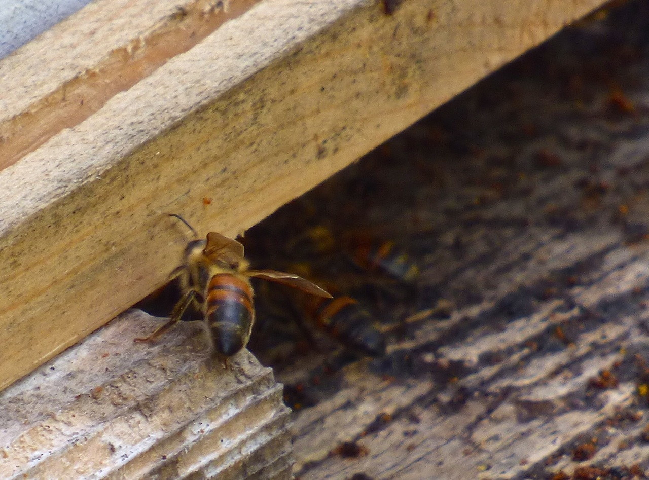Abaco Neem Farm Hives 5