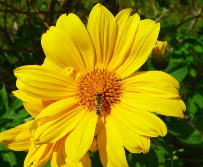 Abaco Neem Farm Hives 6