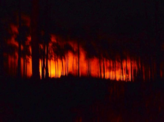 Forest Fire, BPS, Abaco (Luc Lavallee)