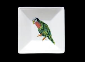 Tidbit_parrot
