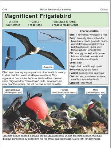 Birds of San Salvador (sample page 1)
