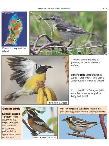 Birds of San Salvador (sample page 3)