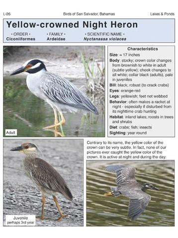 Birds of San Salvador (sample page 4)