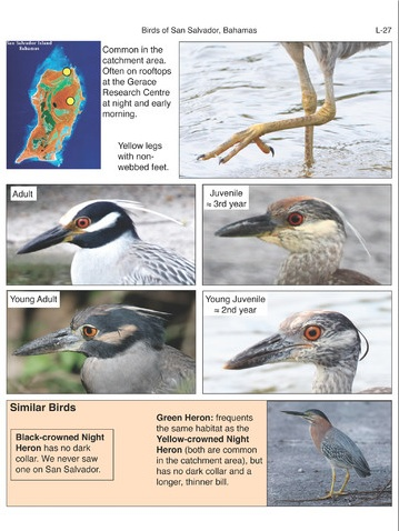 Birds of San Salvador (sample page 5)