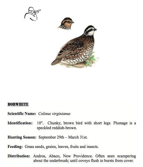 Northern Bobwhite BNT Hunters Guide