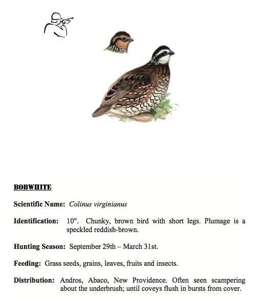 Northern Bobwhite BNT Hunters Guide