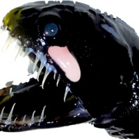 """ALIEN FROM THE DEEP"": ABACO'S SCALELESS BLACK DRAGONFISH"
