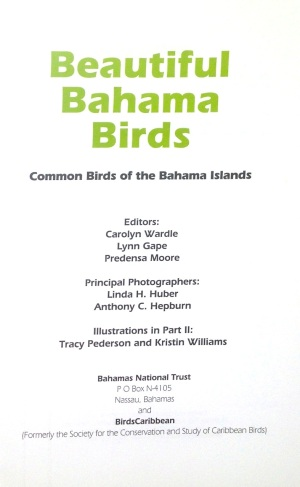 Beautiful Bahama Birds 3