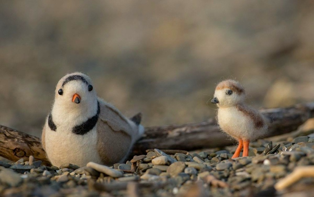Piping Plover Plush Stuffies - Unreal Birds