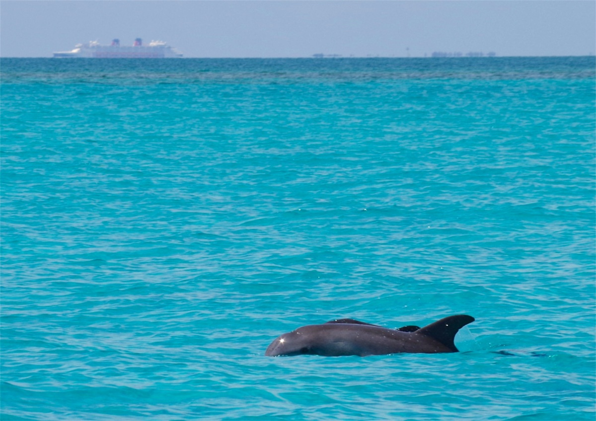 Dolphin Mother & Calf, Sandy Point, Abaco, Bahamas