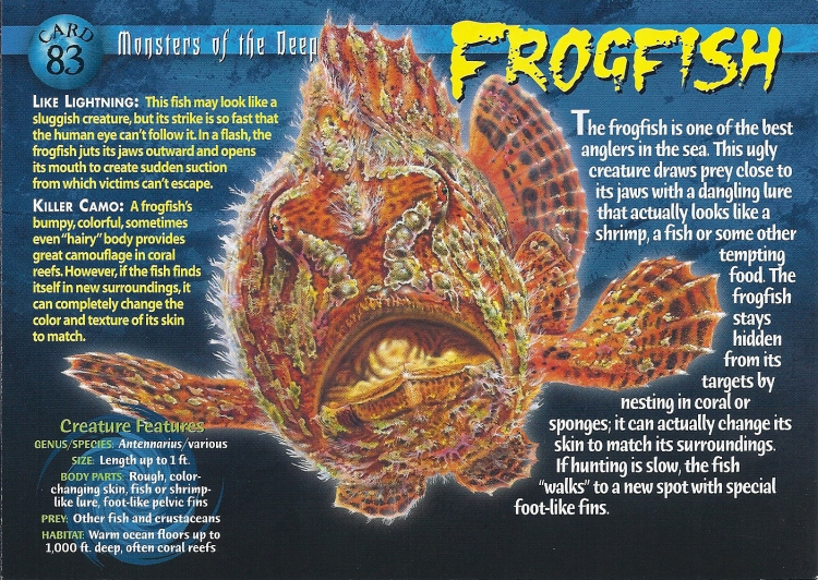 Frogfish Infographic 'Monsters of the Deep'
