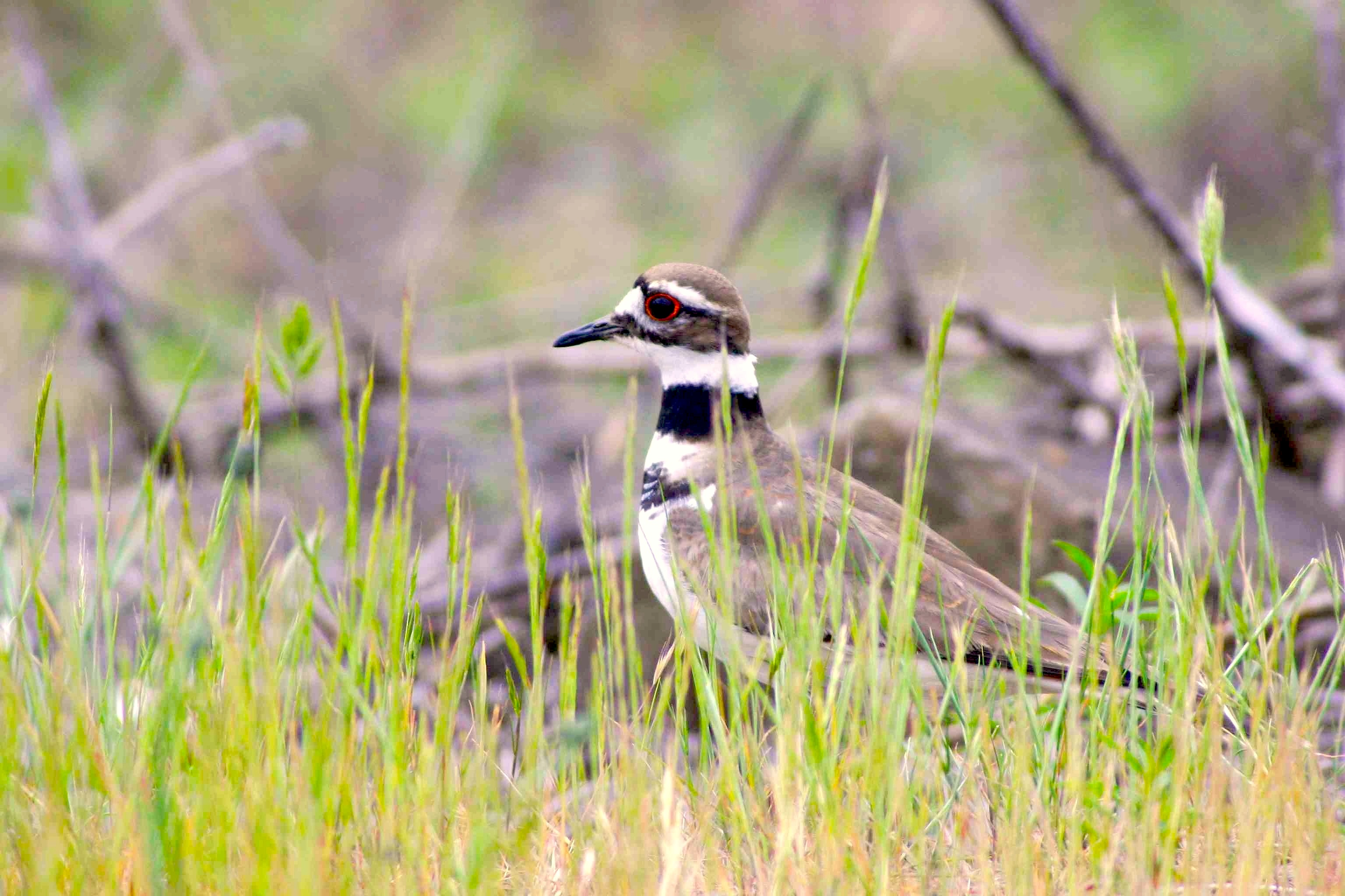 killdeer divorced singles Killdeer, nd family law killdeer family law lawyers, attorneys and law firms singles with cohabitation and prenuptial agreements before marriage.