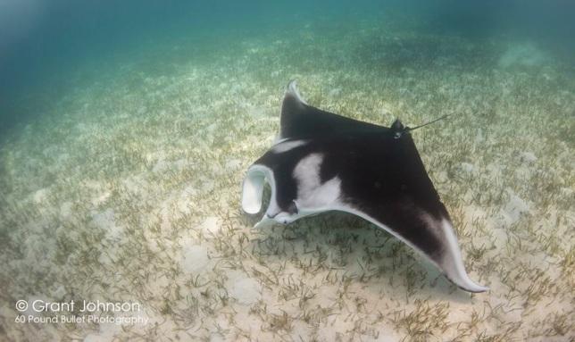 Ray, Bimini's Marine Protected Area Campaign
