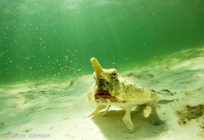 Batfish Bimini's Marine Protected Area Campaign