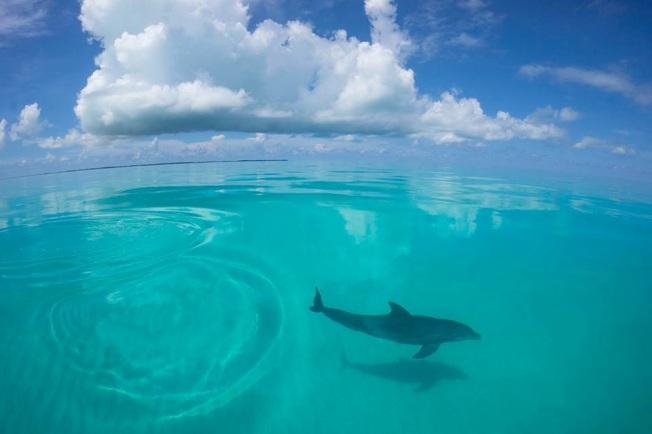 Dolphin Bimini's Marine Protected Area Campaign