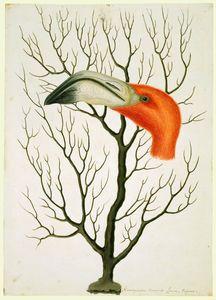 Flamingo Head + Gorgonian Coral (HM QE2)