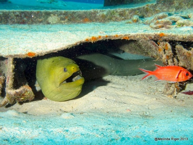 Green Moray Eel with Soldierfish (Melinda Riger @ G B Scuba)
