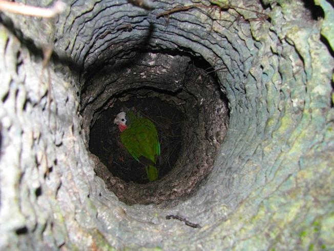 Limestone Holes & Abaco Parrots 08