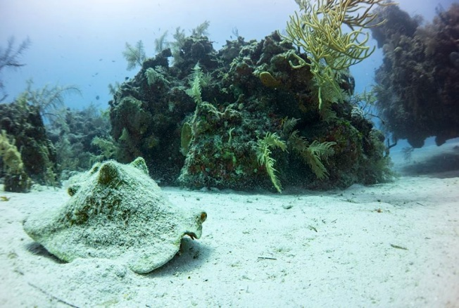 Queen Conch Bimini's Marine Protected Area Campaign