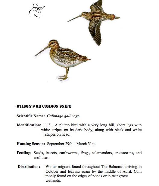 Wilson's Snipe BNT Hunters' Guide jpg
